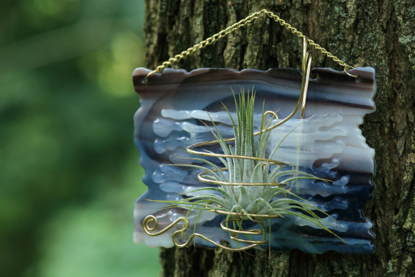 handmade fused glass air plant holder tillandsia